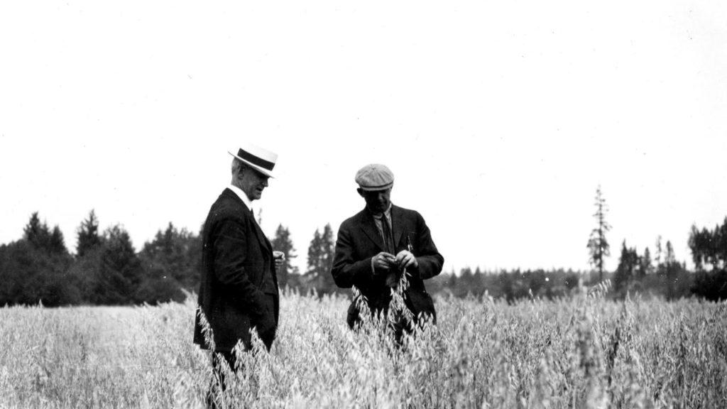 Zwei Männer prüfen die Qualität des Getreides auf einem Feld.